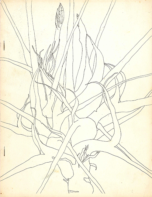 The cover of James Mitchell's Tales of Thorn (Hoddypoll Press, 1968). Drawing: Kenerin Murphy, courtesy James Mitchell.