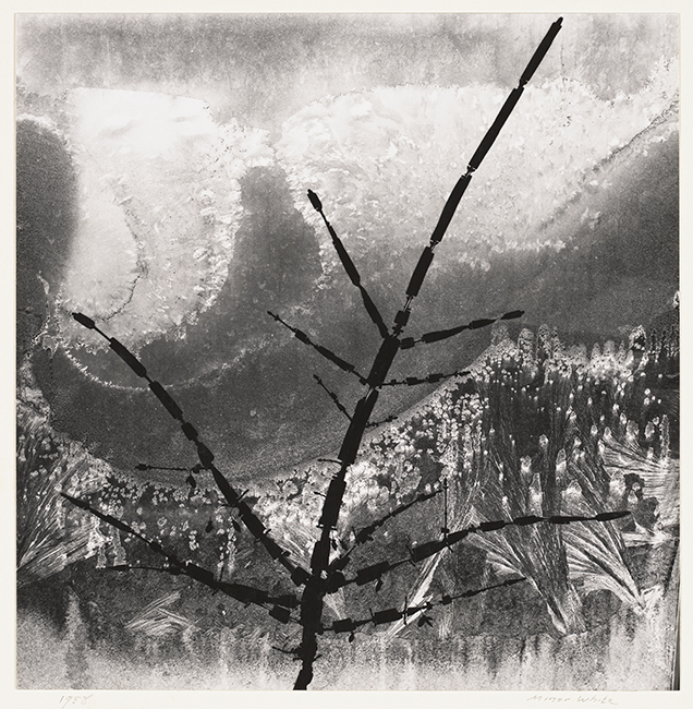 Minor White, Ritual Branch, 1958