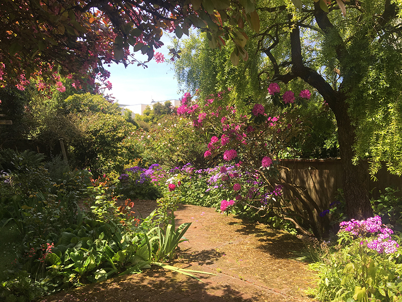 Naz's garden in San Francisco, May 2019.