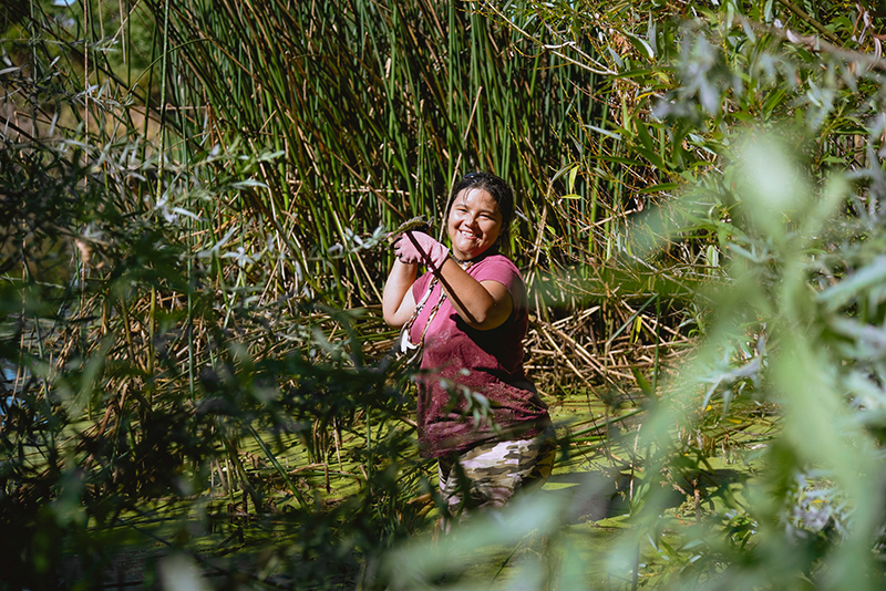 Kanyon Sayers-Roods harvests tule that will be used to make a traditional tule canoe. Photo: Marissa Leshnov.