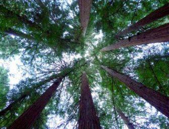 冬季露營之旅~舊金山灣區最棒的戶外勝地