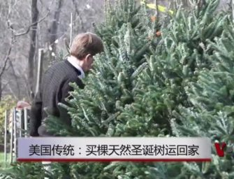 美国传统:买棵天然圣诞树运回家