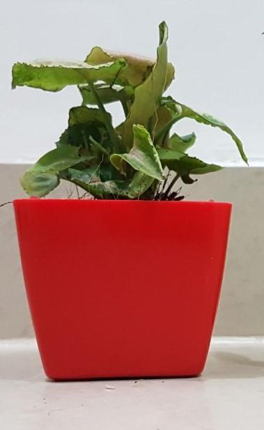Peppy Plants - Portfolio