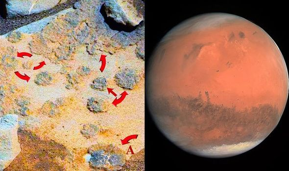 Photos From NASA's Opportunity And Curiosity Rovers Reveal 15 Martian Objects That Resemble Mushrooms