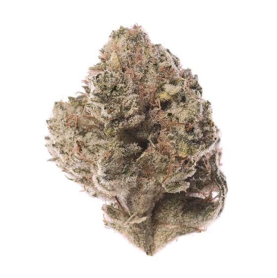 Elmers Glue - Sativa (Colored California)