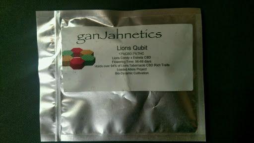 Lions Qubit