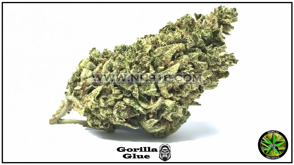 Gorilla Glue (Organic Greenhouse)