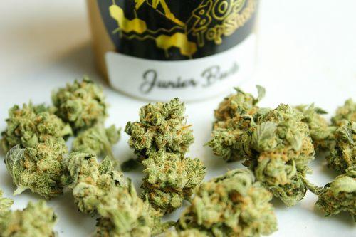 Top Shelf Junior Buds