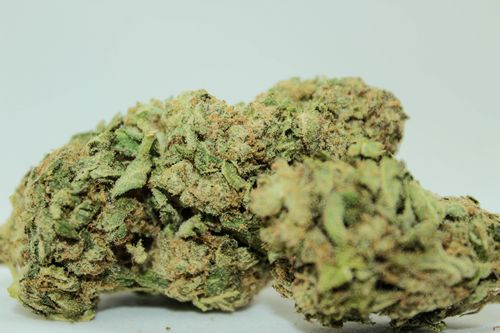 Hybrid - Cheese Candy
