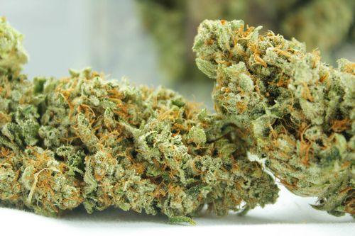 Sativa Hybrid- Tahoe Og