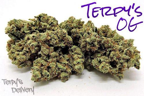 Terpys OG