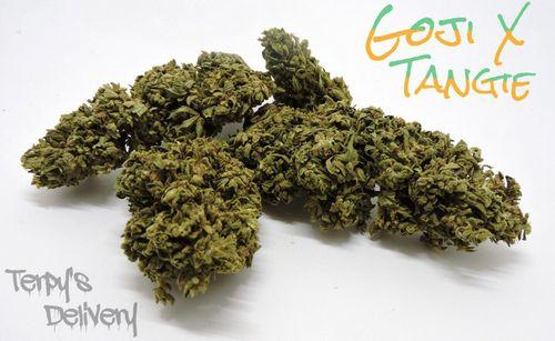 Goji x Tangie (Outdoor Special)
