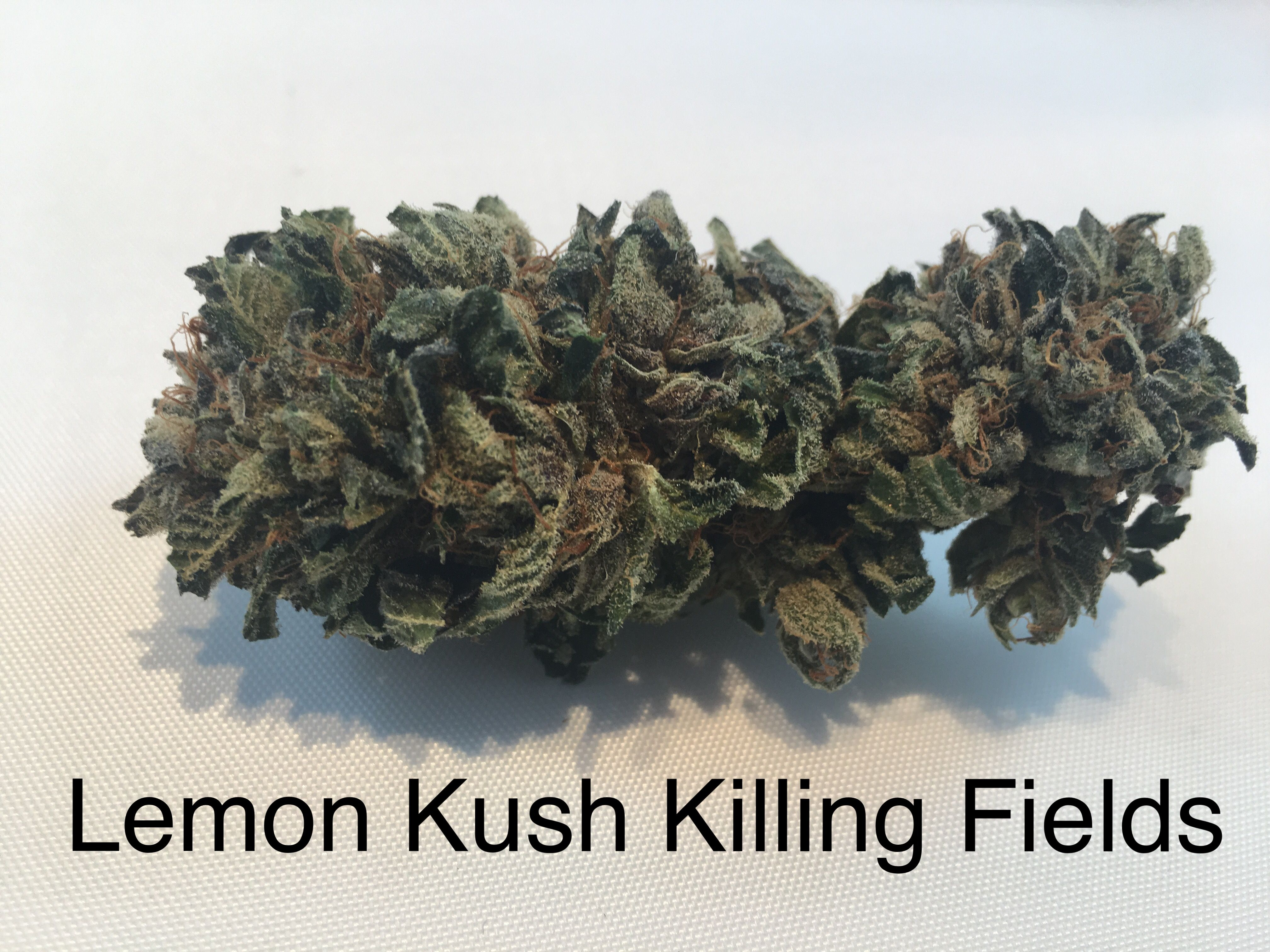 Lemon Kush Killing Fields