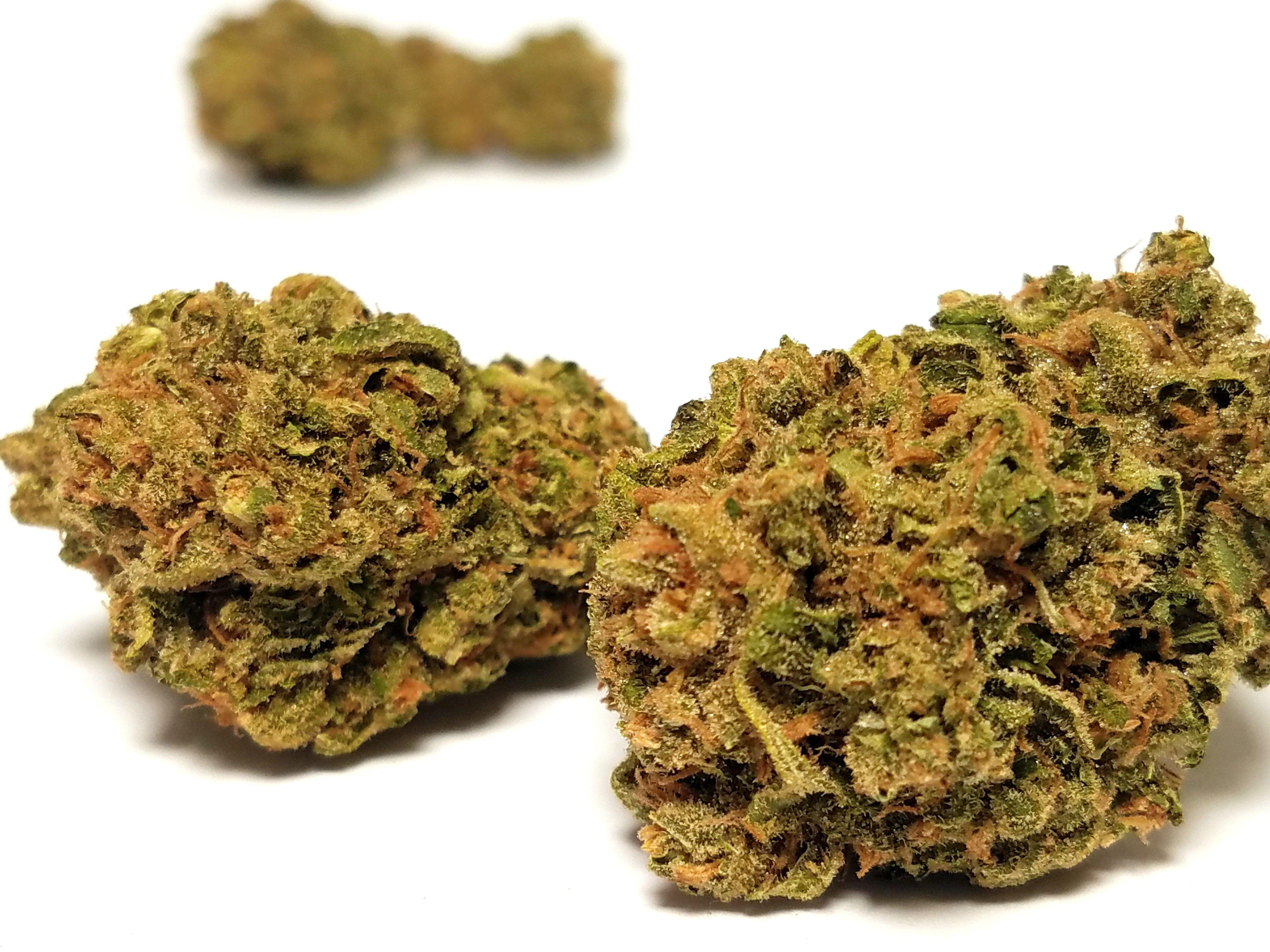Gnome Grown - Durban Poison, Sativa, Greenhouse