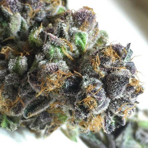 Indica - Lavender