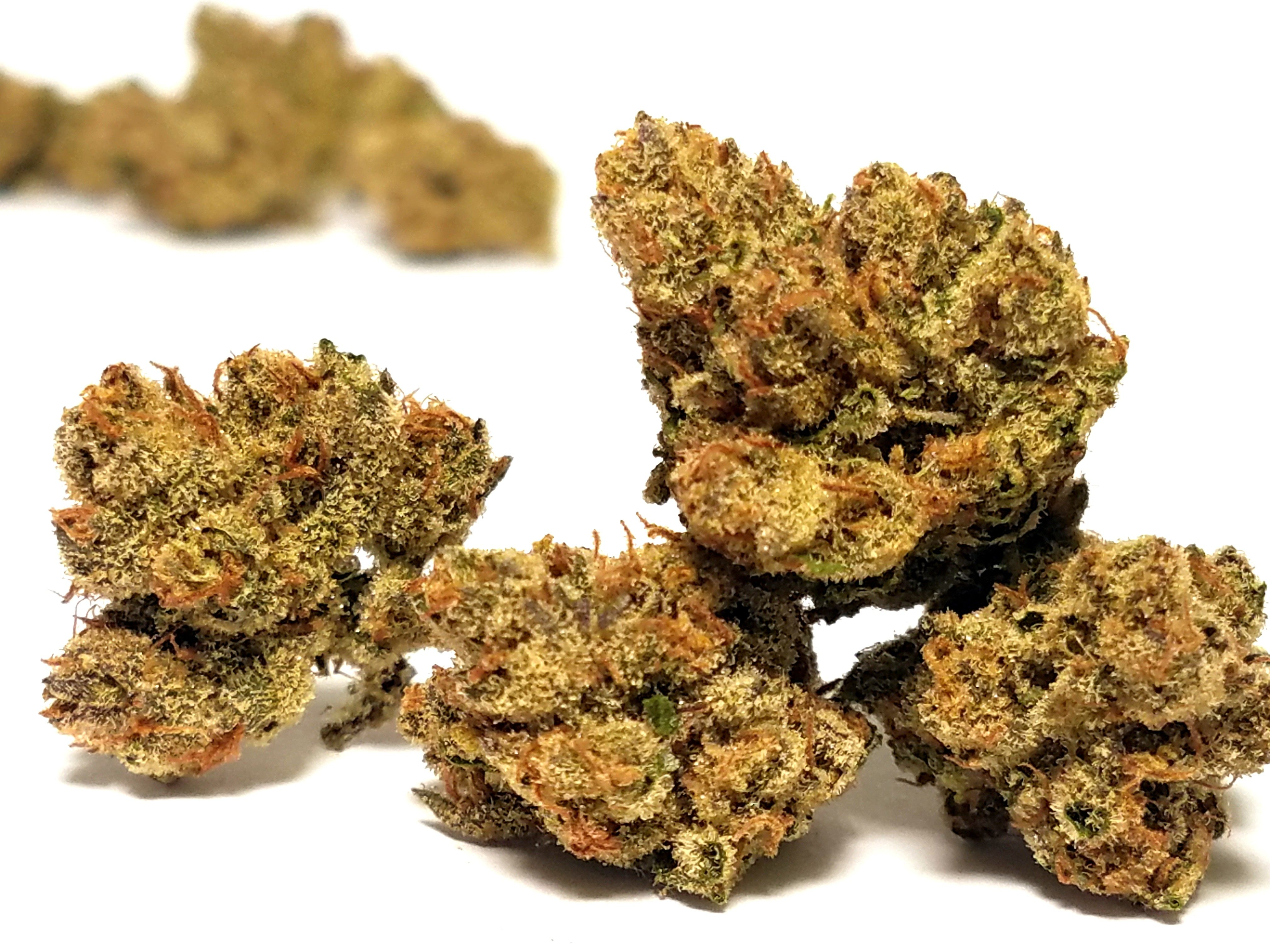 Gnome Grown - Lemon Meringue, Sativa, Greenhouse