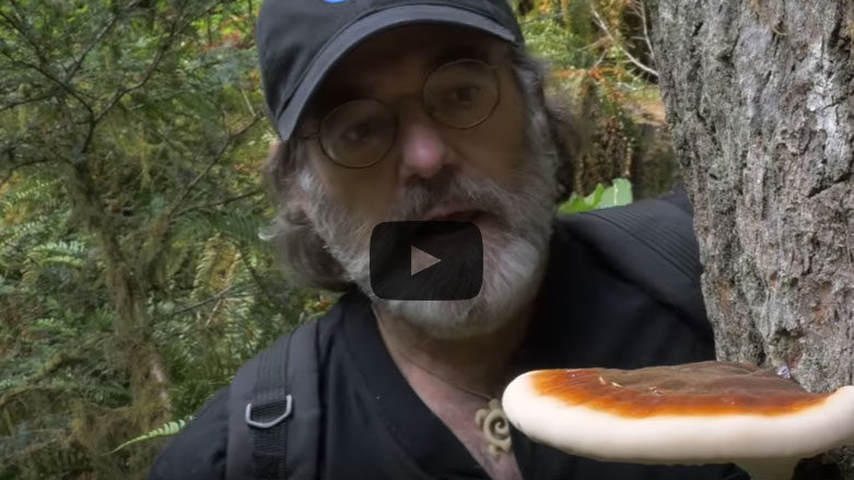 Screen capture of the Could The Mushroom Save The Honey bee? video by