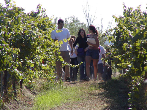 Viticulture and Enology students in vineyard
