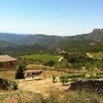 Celler Pasanau vineyards, Montsant in background.