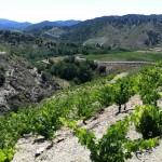 Old vineyard in Priorat planted in slate soil known locally as 'llicorella'.