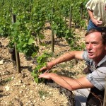 Discussions about the soil occurred in every vineyard