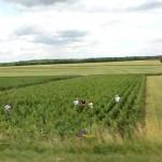 Family working in vineyard in Burgundy