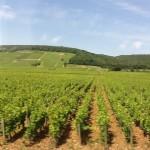 VineyardsBurgI