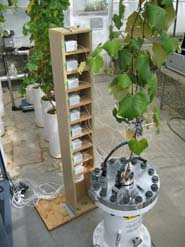 High-precision sensors measure the changes in grape berry diameter while a vine's root system is being pressurized
