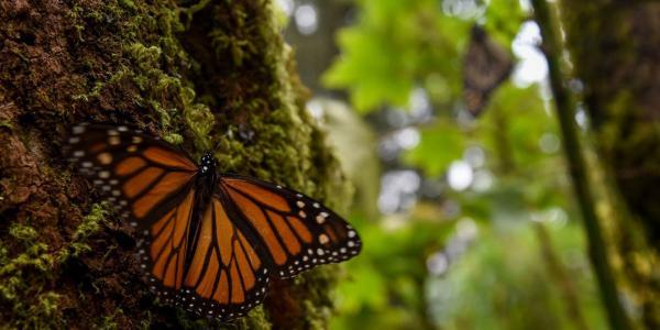 México | Ambientalistas pagan con su vida por dar voz a los que no la tienen