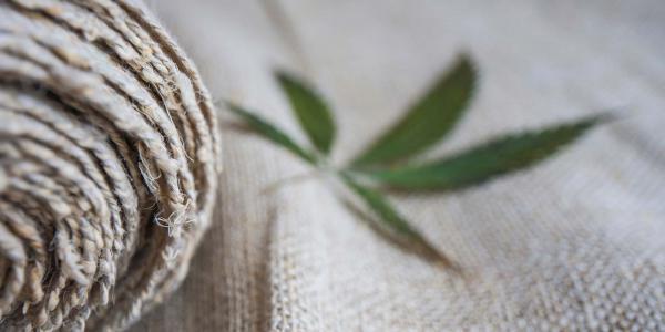 México | Cáñamo, el primo de la marihuana que vale millones pero no se fuma