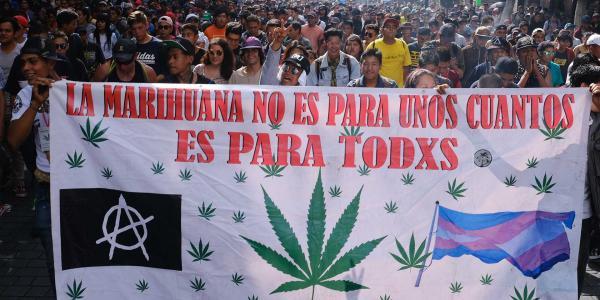 México | Legalización de la marihuana, atorada en el Senado; urge, dicen, pero no le entran al tema
