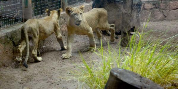México | Mascotas y animales en zoológicos también sufren las consecuencias del COVID-19