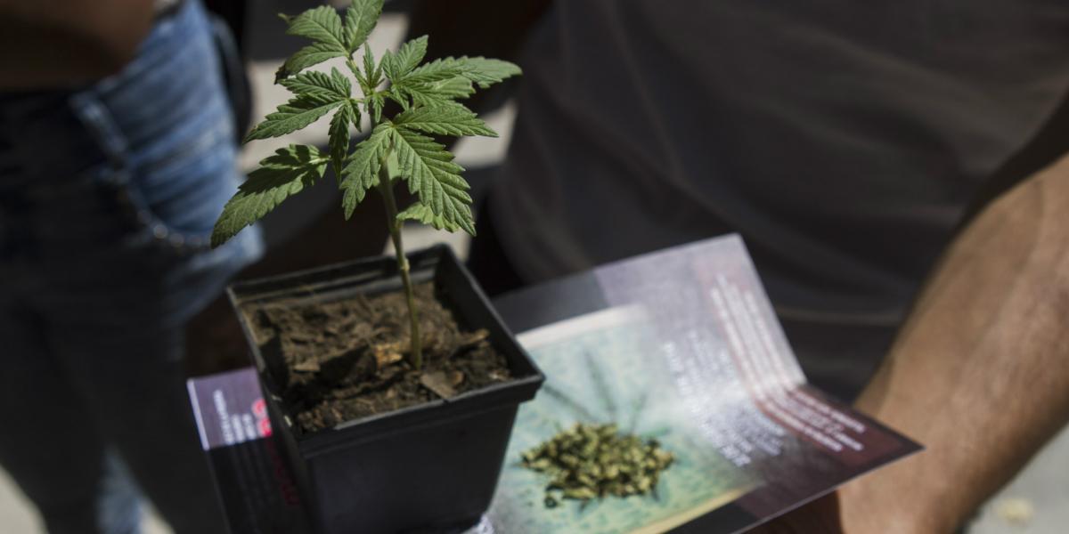 México | La SCJN tomará una decisión crucial sobre la marihuana medicinal