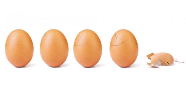 Hashtag | ¿Un huevo famoso y con conciencia?