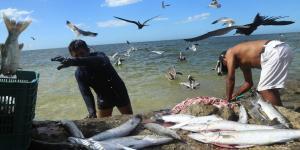Cuestione | A Fondo | Con Peña Nieto, Conapesca multiplicó permisos de pesca
