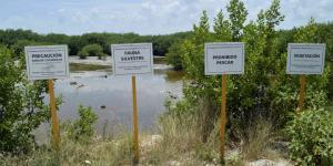México | Los acuerdos medioambientales del T-MEC, el problema del que nadie habla