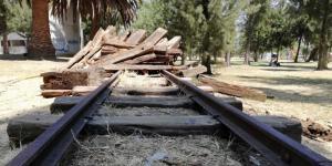 México | Reforestación del Bosque de Aragón: cuando tiraron 118 millones de pesos a la basura