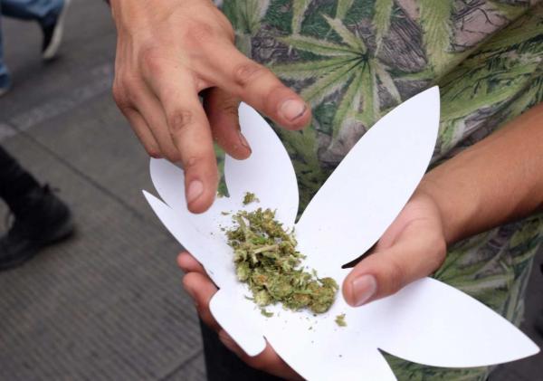 México | En lo que se legaliza, diputados quieren crear el Instituto Mexicano del Cannabis