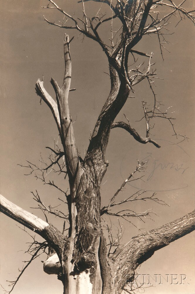 Alfred Stieglitz (American, 1864-1946) The Two Poplars, Lake George, with The Dying Chestnut Tree mounted on the reverse, 1934 (Lot 162, Estimate: $8,000-12,000)