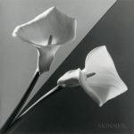 Robert Mapplethorpe (American, 1946-1989)  Calla Lily, 1988 (129, Estimate $20,000-30,000)