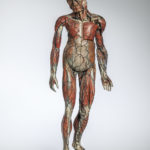 Dr. Louis Auzoux Full Body Medical Teaching Model, France, c. 1847 (Lot 549, Estimate: $8,000-12,000)