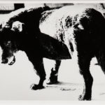 Daido Moriyama (Japanese, b. 1938) Stray Dog, Misawa, 1971, printed c. 2002 (Lot 144, Estimate: $3,000-5,000)
