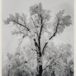Ansel Adams (American, 1902-1984) Oak Tree, Snow Storm, Yosemite Valley, 1948, printed c. 1963-1970 (Lot 127, Estimate: $8,000-12,000)