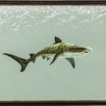 Richard Ellis, Shark (Lot 1165, Estimate: $600-800)