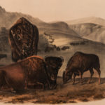 Audubon, John James (1785-1851) Bos Americanus, American Bison or Buffalo, Plate LVII (Lot 1219, Estimate: $12,000-18,000)