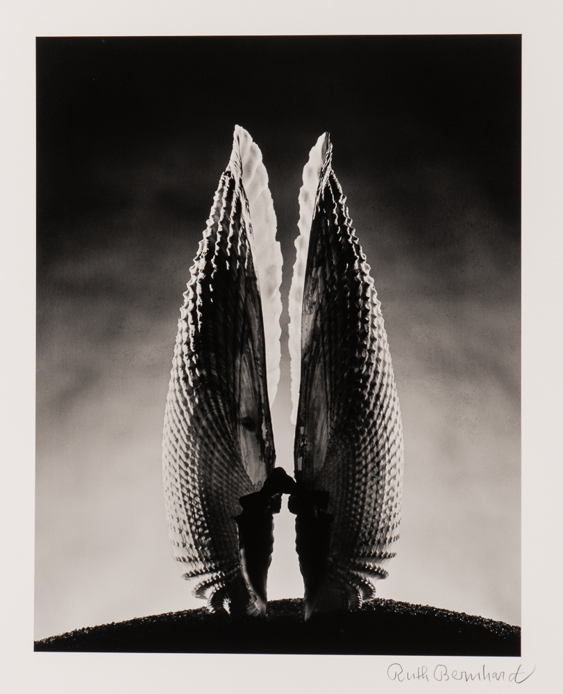 Ruth Bernhard (American, 1905-2006), <i>Angelwing</i> (Lot 123, Estimate: $3,500-5,500)