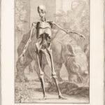 Tabulae Sceleti et Musculorum Corporis Humani, Albinus, Bernhard Siegfried (1697-1770)  (Lot 1080, Estimate: $3,000-5,000)