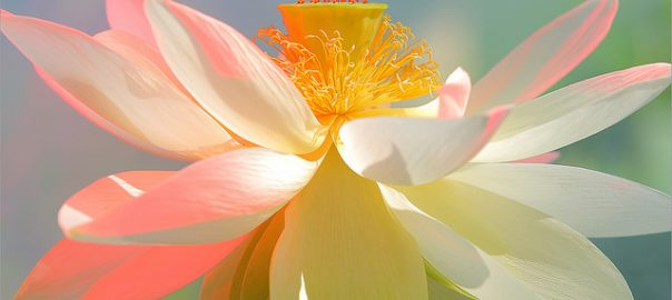 Lotus Flowers Or Water Lily Flowers For Your Wedding Salt Lake Bride