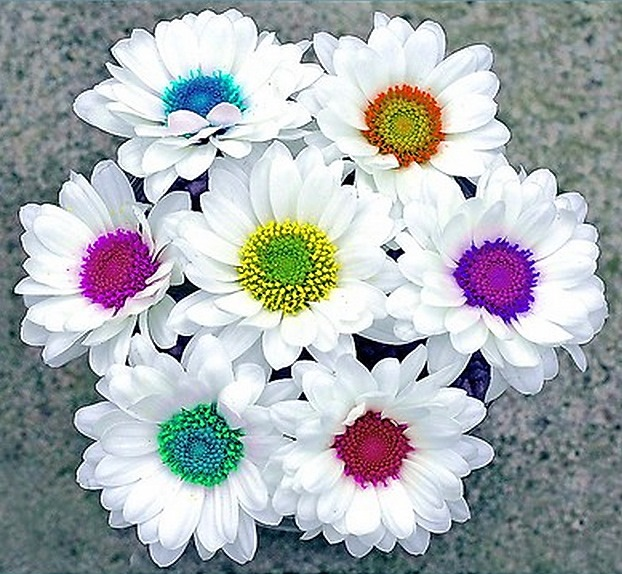 Daisies bridal bouquet