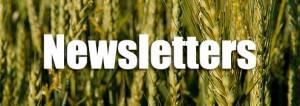 Newsletter-Button